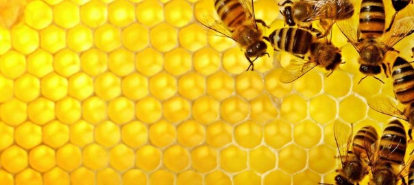 api nei telai di cera