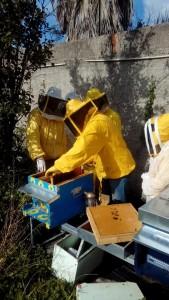 Corso apicoltura novembre 10