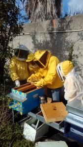 Corso apicoltura novembre 12