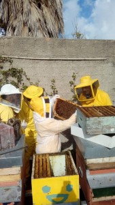 Corso apicoltura novembre 13