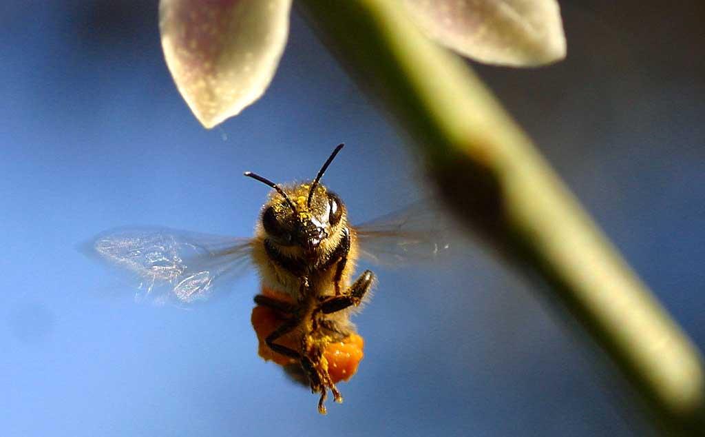 ape in volo